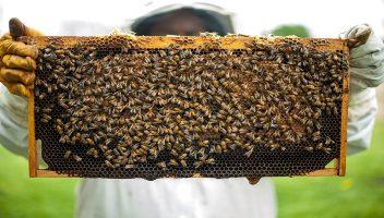 Bijenkast zelf maken